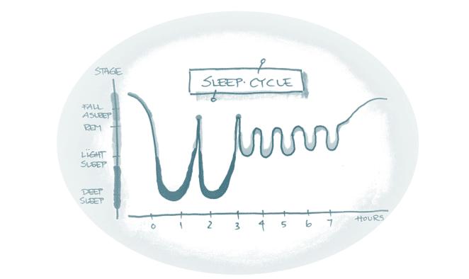 Foredrag søvn - sleep cycle